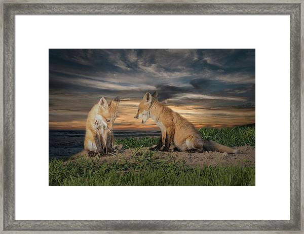 Framed Print featuring the photograph Red Fox Kits - Past Curfew by Patti Deters