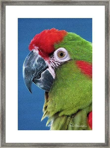 Red-fronted Macaw 3761 Framed Print