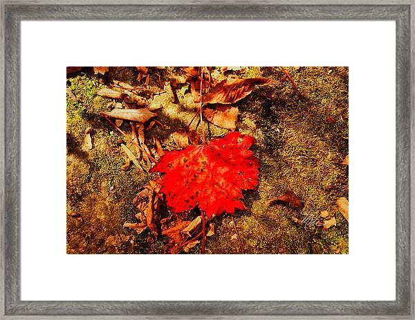 Red Leaf On Mossy Rock Framed Print