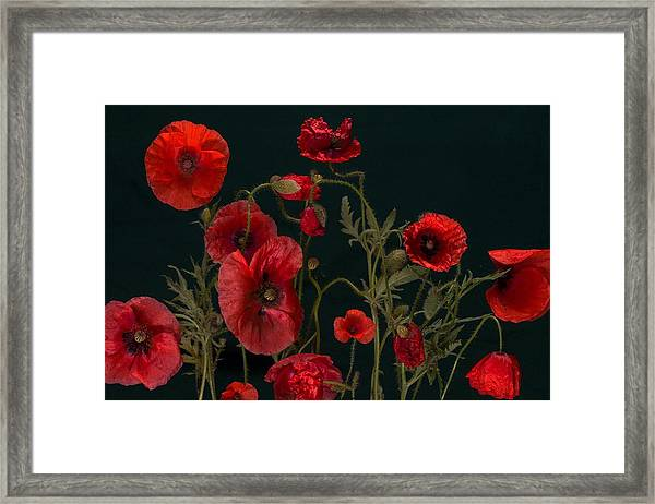 Red Poppies On Black Framed Print