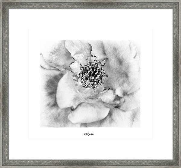 Red Rose Flower Details Framed Print
