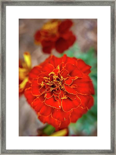 Red Summer Flowers Framed Print