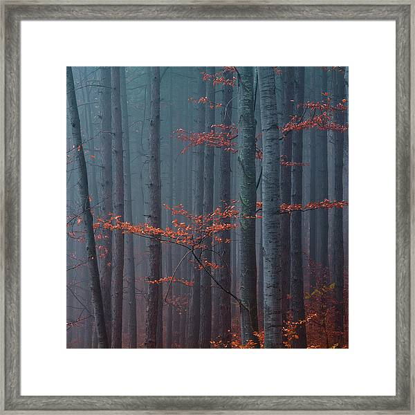 Red Wood Framed Print