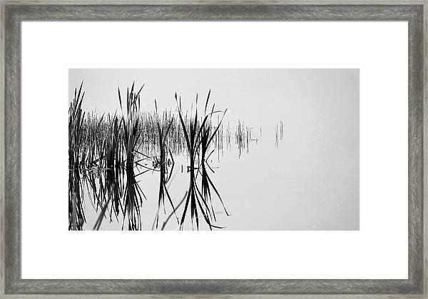 Reed Reflection Framed Print