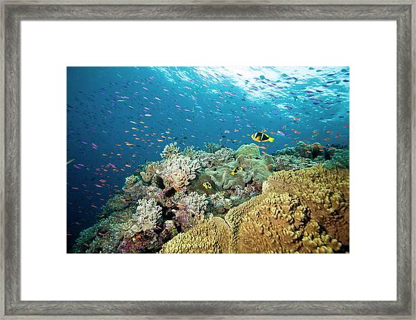 Reef Scene Framed Print