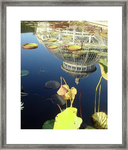 Reflection Of Botanical Garden Framed Print by Margaret Mendel
