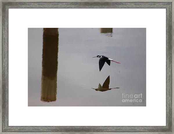 Reflection Of The Salton Sea Black Neck Stilt Flying Framed Print