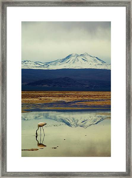 Reflections, Salar De Atacama, Chile Framed Print
