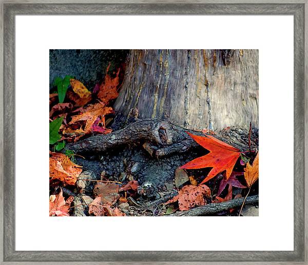 Remnants Of Autumn Framed Print