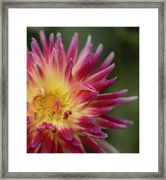 Revel Petal Framed Print