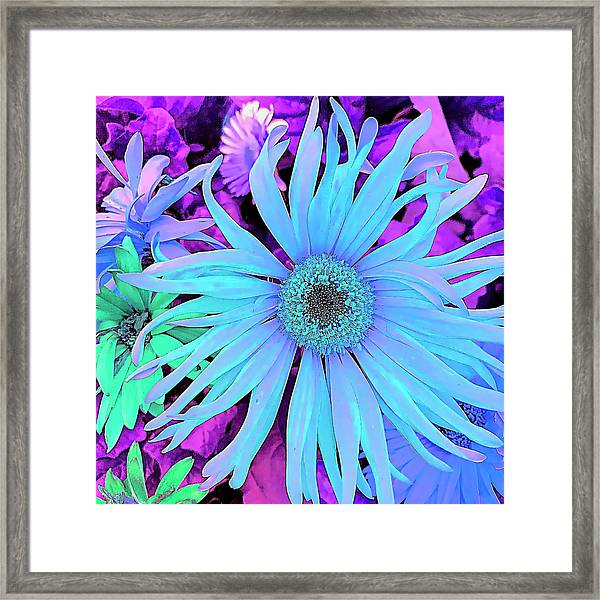 Rhapsody In Bleu Framed Print