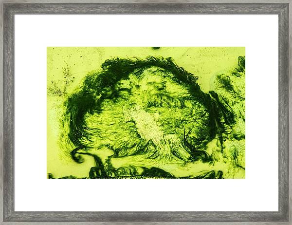Rhapsody In Green Framed Print