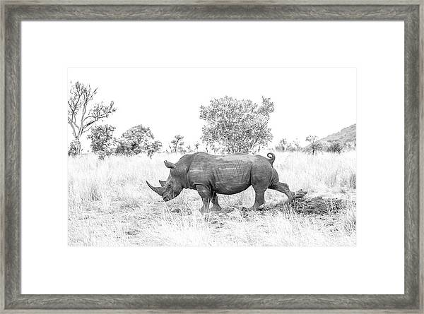 Rhino Business Framed Print
