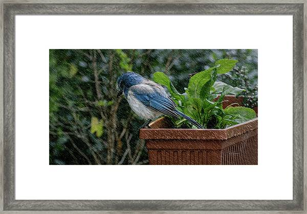 Ridin The Storm Out Framed Print