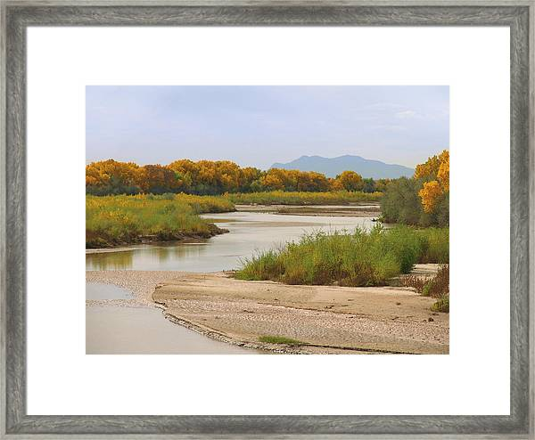 Rio Grande And Cottonwoods In Autumn Framed Print