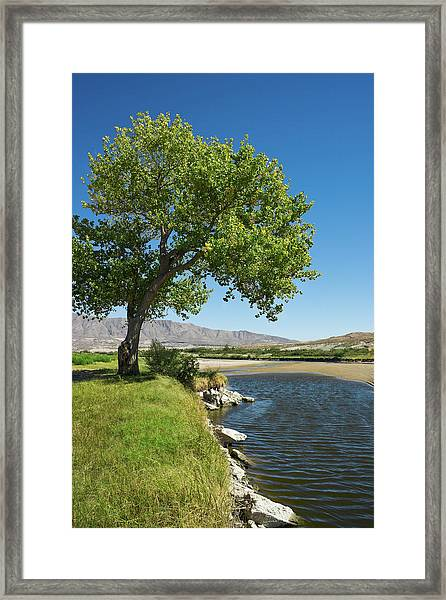 Rio Grande River And Cottonwood Tree El Framed Print