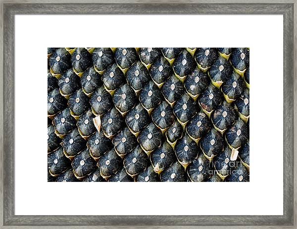 Ripe Seeds In Sunflower. Extreme Close Framed Print
