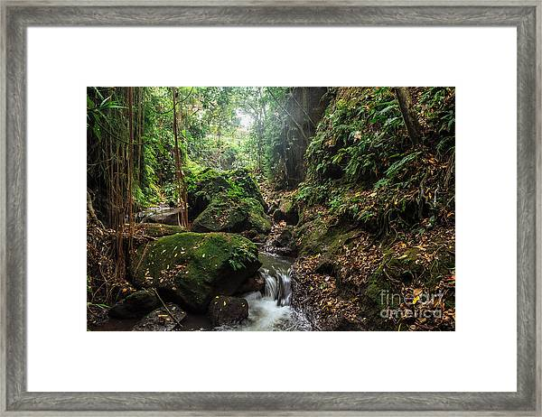 River In Stones Of Tropical Jungle Framed Print
