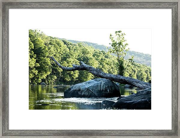 River Tree Framed Print