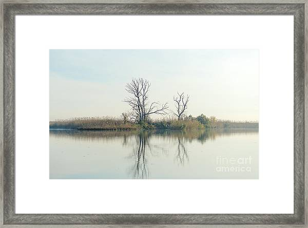 River With Tree Reflected In The Delta Framed Print