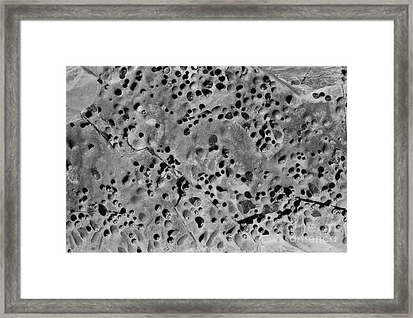 Rock Creatures Framed Print
