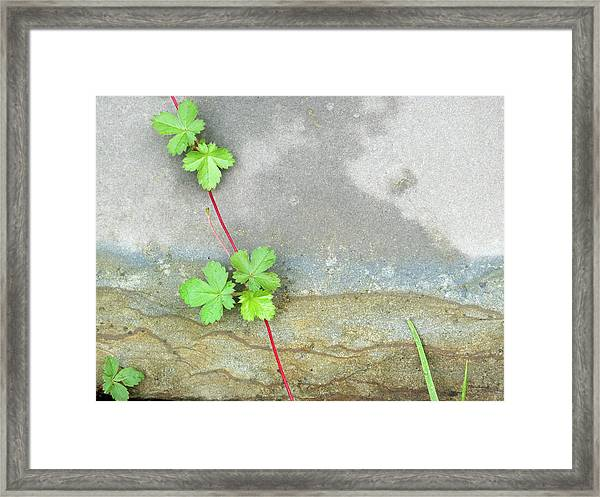 Rock Stain Abstract 4 Framed Print