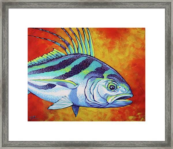 Rooster Fish 2 Framed Print