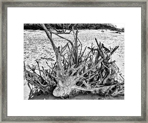Rooted In Black And White Framed Print