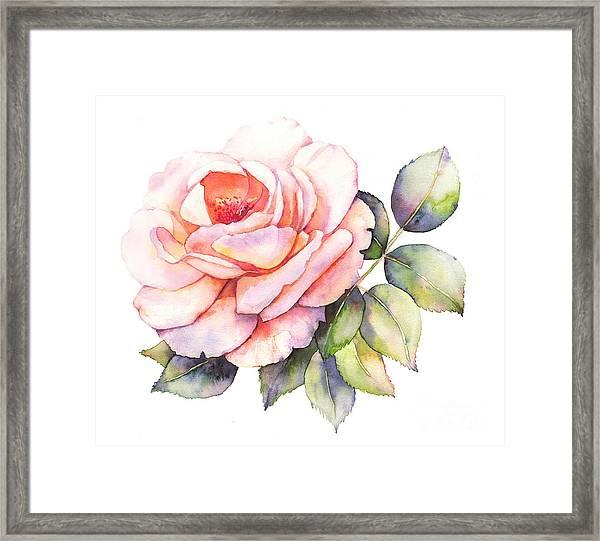 Rose Flower Watercolor Illustration Framed Print
