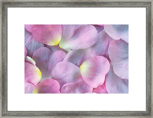 Rose Petals Framed Print by Martin Ruegner