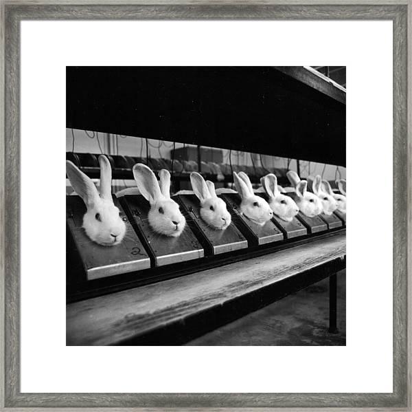 Row Of Rabbits Framed Print