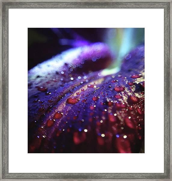 Ruby Blue Framed Print