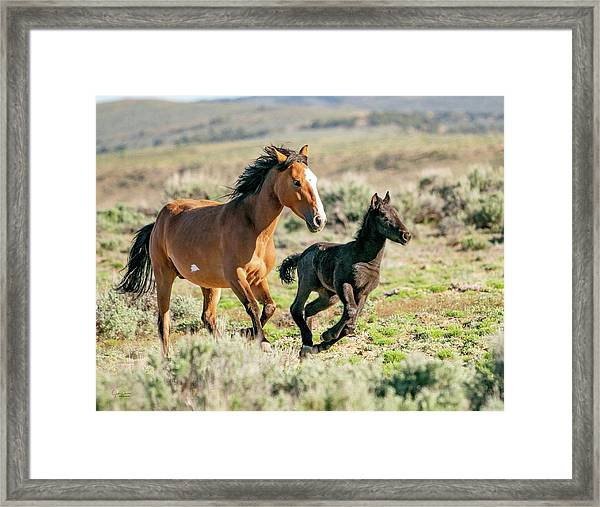 Running Wild Mustangs - Mom And Baby Framed Print