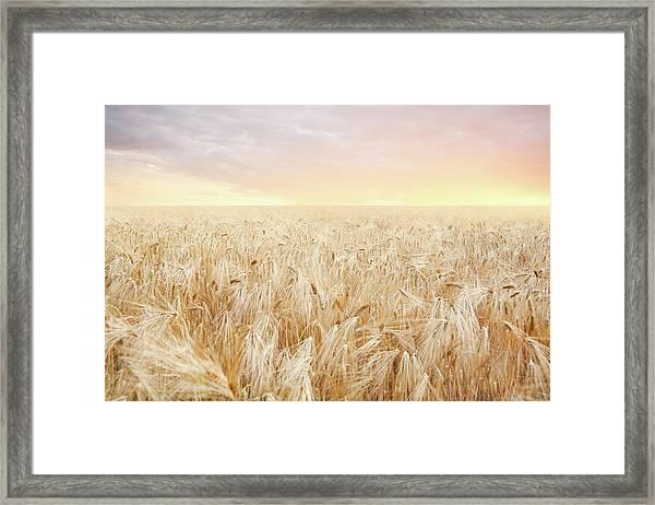 Rye Field Framed Print by Nadyaphoto