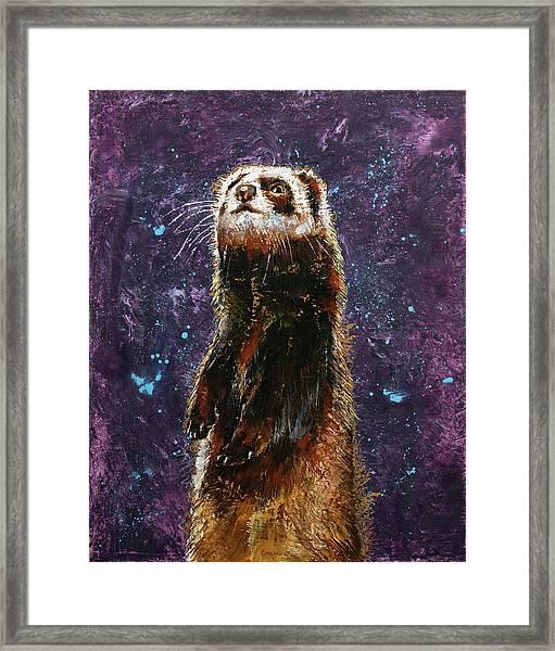 Sable Ferret Framed Print