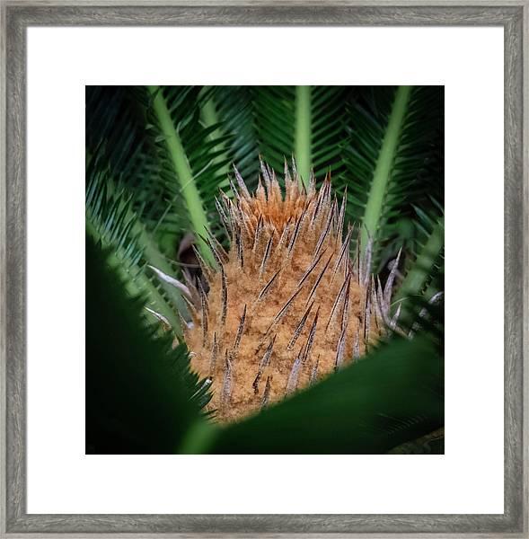 Sago Palm Framed Print
