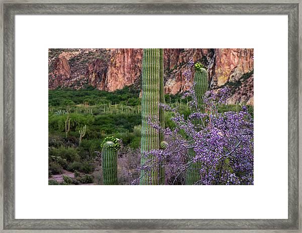 Saguaro Cactus Blooms And Ironwood Close Up Framed Print
