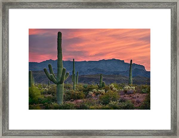 Saguaro Cactus With Arizona Sunset Framed Print