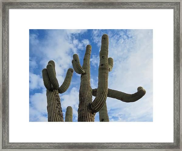 Saguaro Clique Framed Print