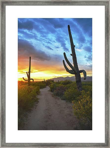 Saguaro Trail Framed Print