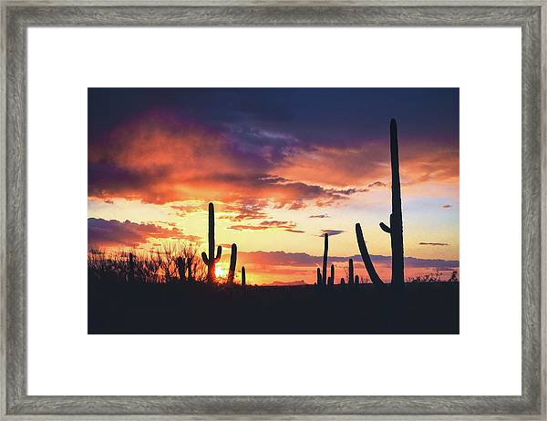 Saguaros Watch The Sunset Framed Print