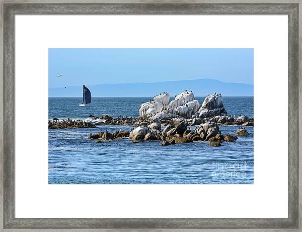 Sailboat At Bird Rock Framed Print