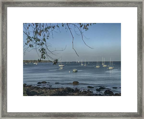 Sailboats In Rockland Harbor Framed Print