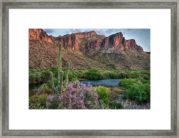 Salt River Saguaro And Ironwood Blooms Framed Print
