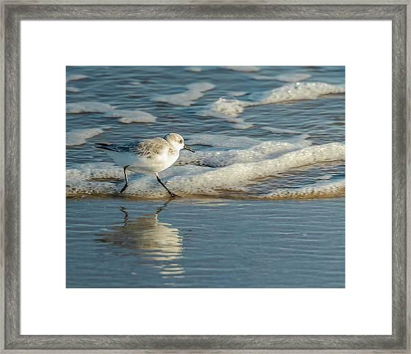 Sanderling At Assateague Island National Seashore Framed Print