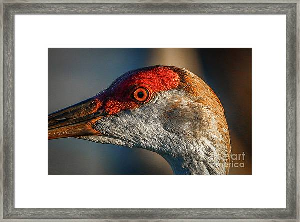 Framed Print featuring the photograph Sandhill Close Up Portrait by Tom Claud