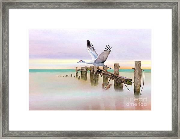 Sandhill Crane And Old Dock Framed Print