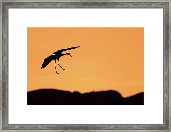 Sandhill Crane Silhouette Framed Print