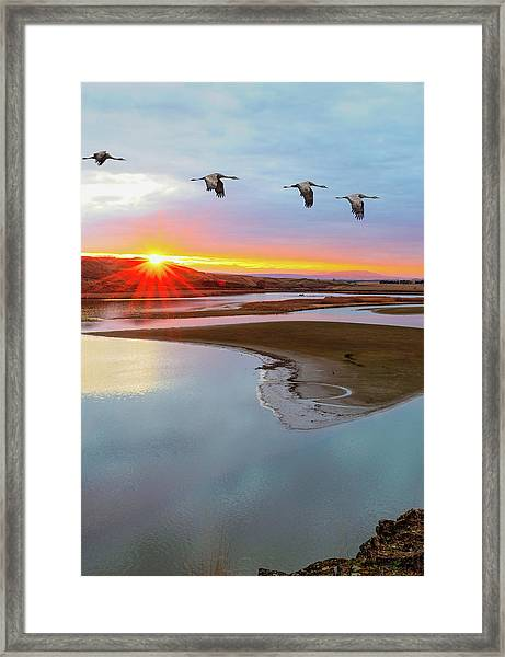 Sandhill Cranes At Scooteney Reservoir Wa Framed Print