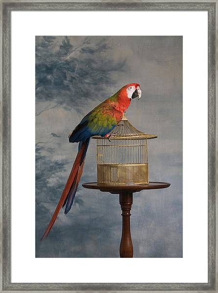 Scarlet Macaw Ara Macao Sitting On Cage Framed Print
